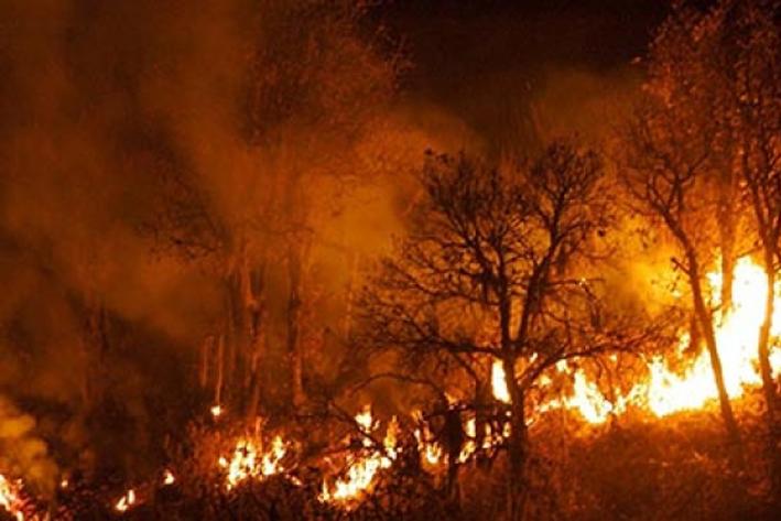 Deja cuatro muertos incendios forestales