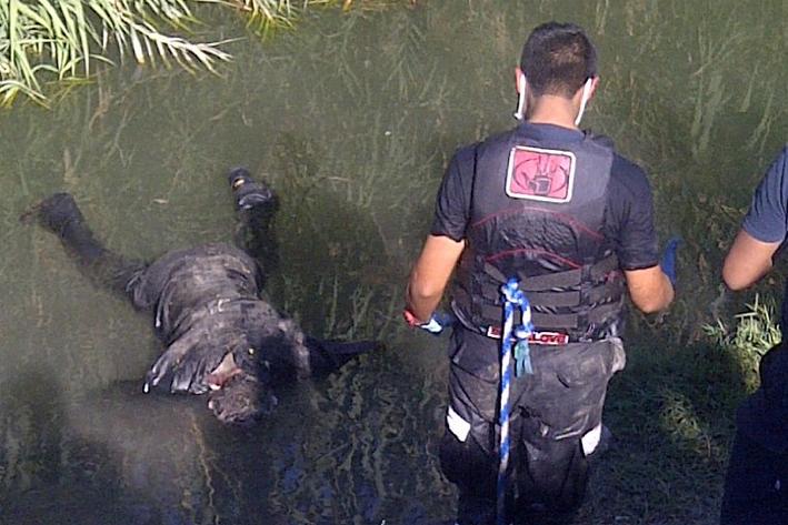 Identifican cadáver del Río