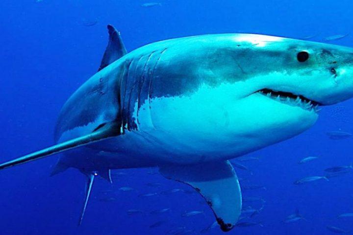 Tiburón en busca y captura tras matar a un surfista en Australia