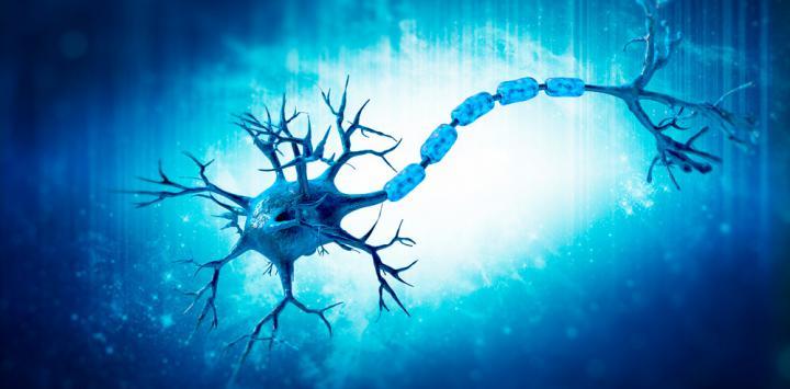 Células madre de la médula espinal pueden ayudar a repararla tras una lesión