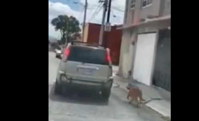 En Hidalgo pareja arrastra a un perro amarrado a su camioneta