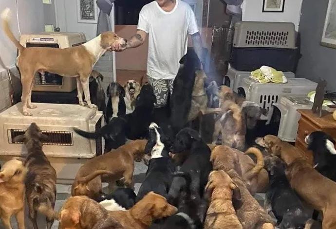 Necesitamos manos, dice hombre que resguardó a 300 perros callejeros