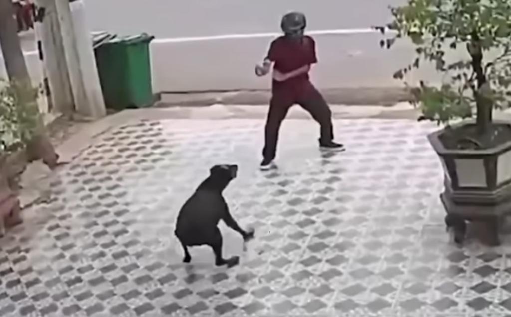 VIDEO: Hombre se defiende como en Karate Kid, tras ser atacado por dos perros