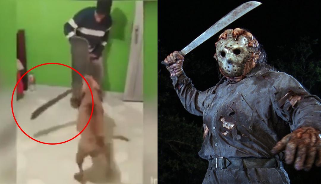 VIDEO VIRAL: Perro ataca a su dueño... ¡A machetazos!