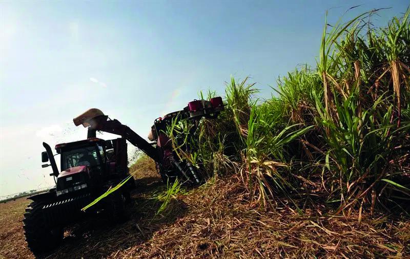 Cuba proyecta producir 1,2 millones de toneladas de azúcar en actual cosecha