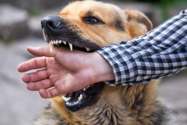 Muerden perros aciudadanos: Salud