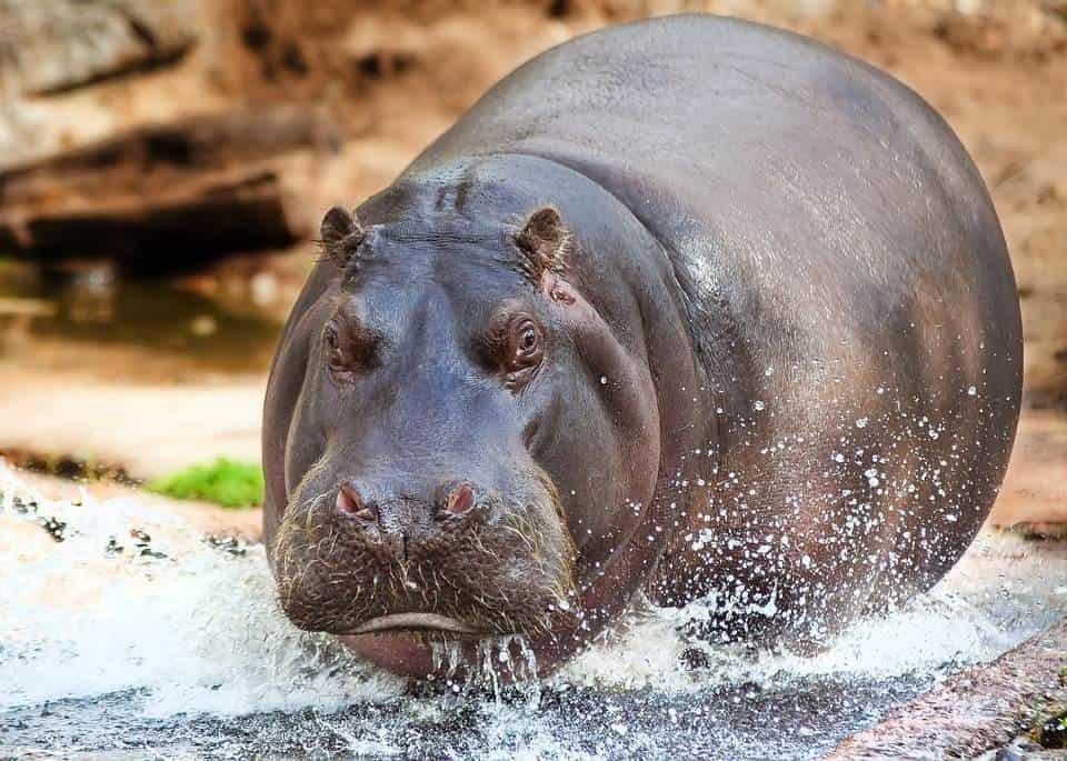 6 animales salvajes que parecen inofensivos pero son letales