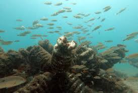Arrecifes artificiales: Un paso hacia la recuperación marina en Costa Rica