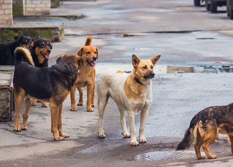 Jauría ingresa a zoológico de Nuevo León y mata a 2 canguros