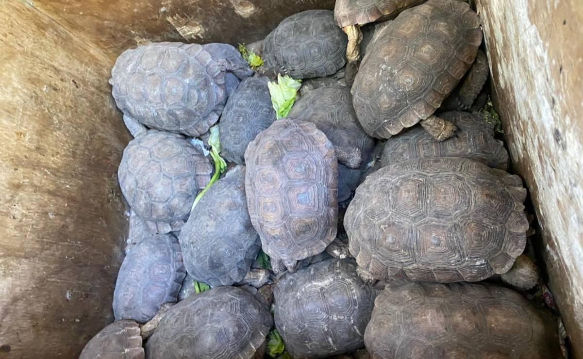 Trasladan a zoológico de Culiacán especies aseguradas en Iztapalapa