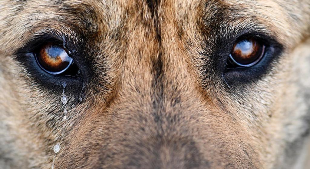 Asesinan a perro quemándolo entre basura y llantas