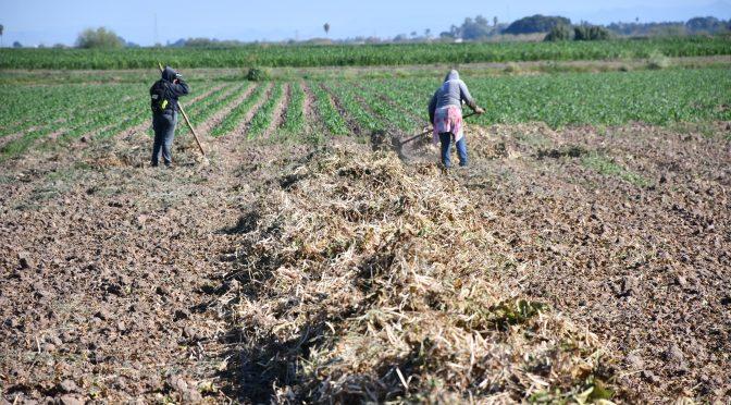 Agonizan productores del campo por falta de apoyo
