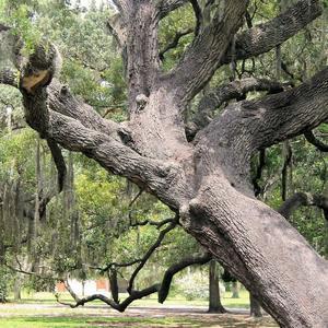 Invitan a fotografiar el árbol más maltratado