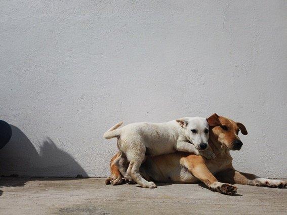 Suman 563 perros y gatos adoptados desde 2018 en Puebla