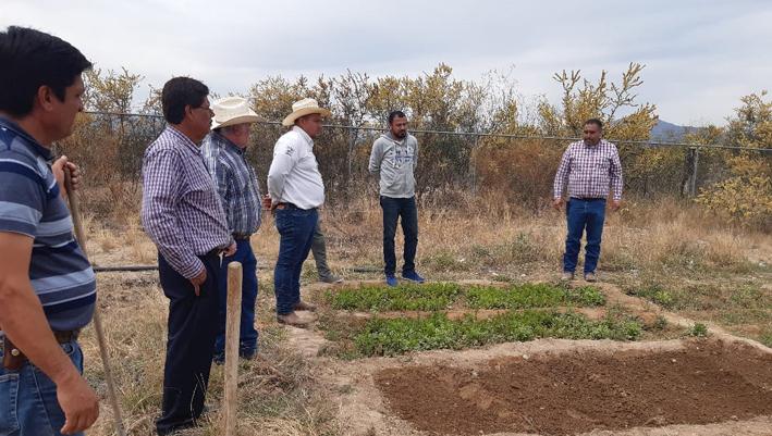 Harán producir los huertos familiares en San Buenaventura