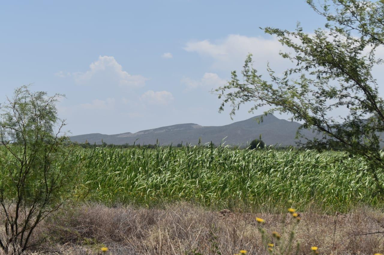 Asociación  de Mineros  bajará apoyos al campo en Lamadrid