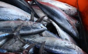 En México solo hay 3 pesquerías certificadas pese a tratados
