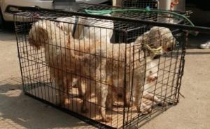 Rescatan a 26 perros de supuesta asociación protectora de animales