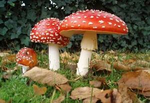 Plantean despenalización de los hongos alucinógenos