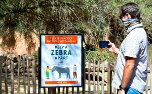 Tres zoológicos de CDMX reabrirán el próximo martes