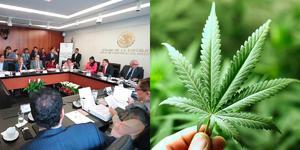 Diputados debaten en comisiones minuta del uso lúdico de la marihuana