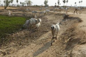 Sin agua, 50 ejidos de Región Desierto
