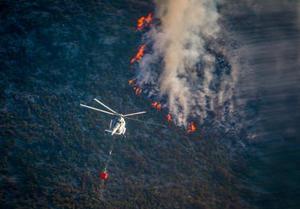 Más de 2,300 hectáreas de pino ha consumido fuego en Arteaga