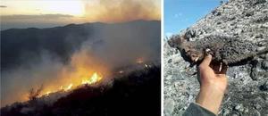 Recuperan control en incendio forestal en Villa de Guadalupe