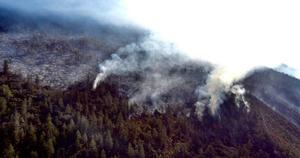 Al 55%, control de incendio en Sierra de Arteaga