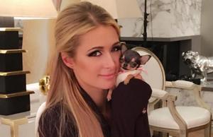 Paris Hilton compra a su perro minibolso con un costo mayor a los 100 mil pesos