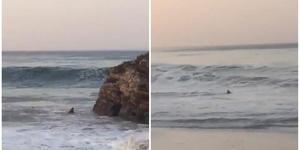 Reportan de avistamiento de tiburones en playa de Oaxaca