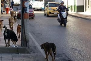 Pandemia aumentó abandonode las mascotas en Coahuila