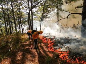 Aplicará estado medidas preventivas de incendios