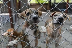 Buscan aumentar sanciones por maltrato animal en CDMX