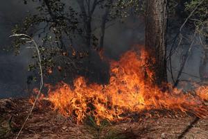 Por calor continuarían incendios en Coahuila