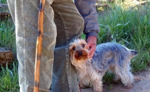 Abuelo derrama amor en redes sociales por traer a su perrito a todos lados