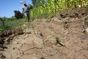 Beneficiarían al campo lluvias por frente frío en la Región Desierto