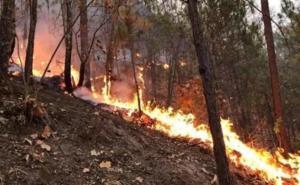 Realizan labores para controlar incendio forestal en Hidalgo