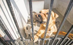 Avanza en Congreso CDMX prohibición de tatuar animales