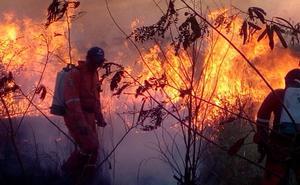 Suman 139 incendios forestales en primeros días de abril en Yucatán
