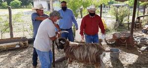 Avanzan con campañade sanidad animal en SB