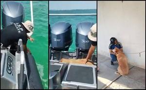 Rescatan a perrita que fue arrastrada por la corriente en Yucatán