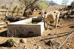 Sequía extrema en 5 municipios de Coahuila