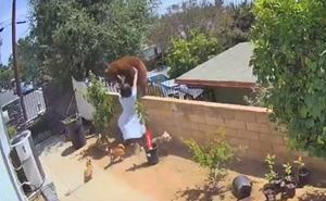 Una joven se enfrenta a oso para defender a sus perros en California
