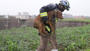 Rescata a los dos perritos atrapados en socavón