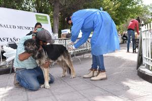 En las calles de Castaños viven 500 perros