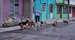 La Región Centro de los perros