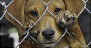 En Monterrey se castiga el maltrato animal con 2 años de cárcel y multa de 4 mil pesos