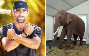 Elefante 'Big Boy' es trasladado a santuario natural en Sinaloa