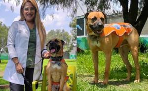Elmar, perrito rescatado en Metro y ahora ayuda a niños especiales